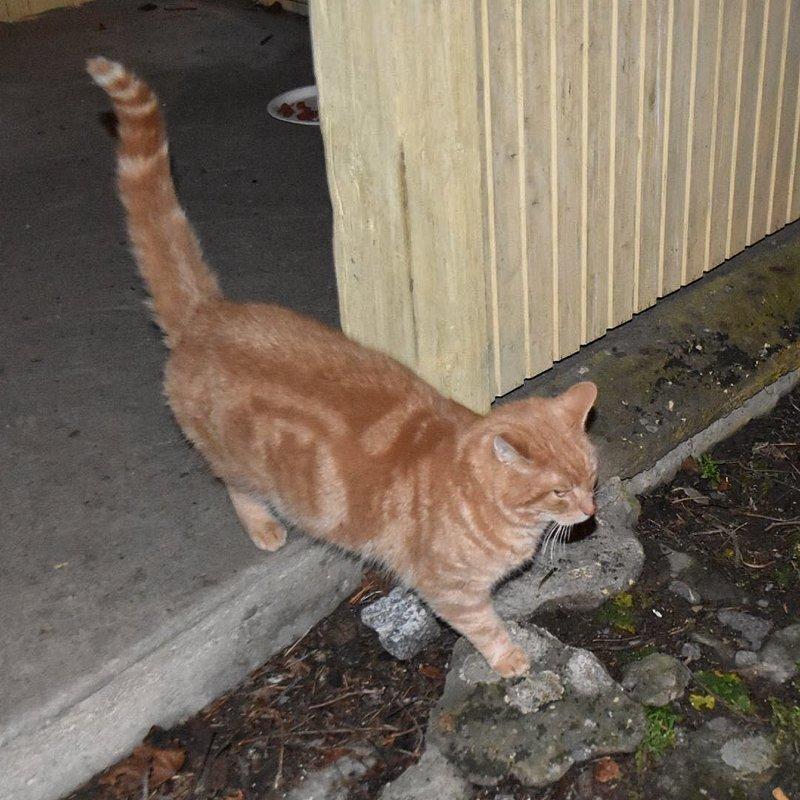 Saggrenda: Katten Gizmo er hjemme etter to år på vandring 2