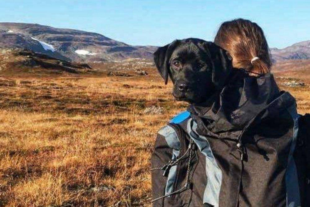 På sykkeltur med en labrador og med livet som innsats 4