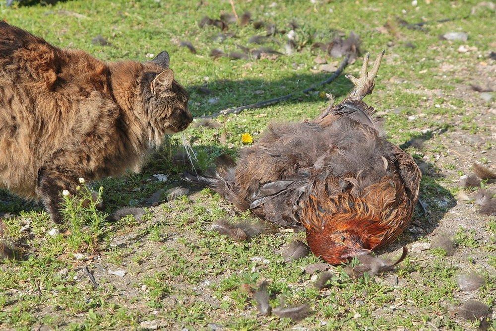 Fiskum: Løs hund drepte høner for fote 3
