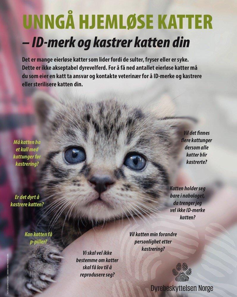 Rekordår for hjemløse katter - Dyrebeskyttelsen krever obligatorisk ID-merking 1