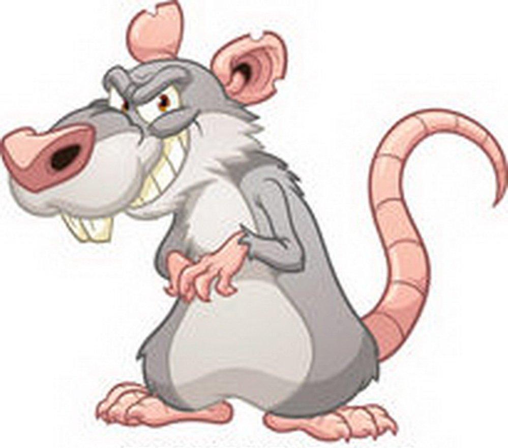 Nå kommer kulda - og med den kommer rotter og mus 1